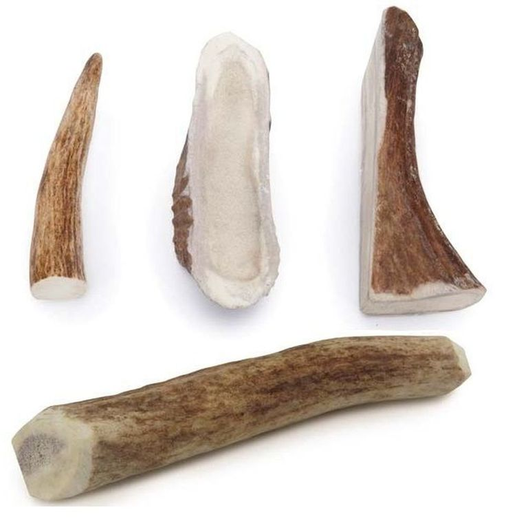 Are Antler Chews Good For Dogs Teeth