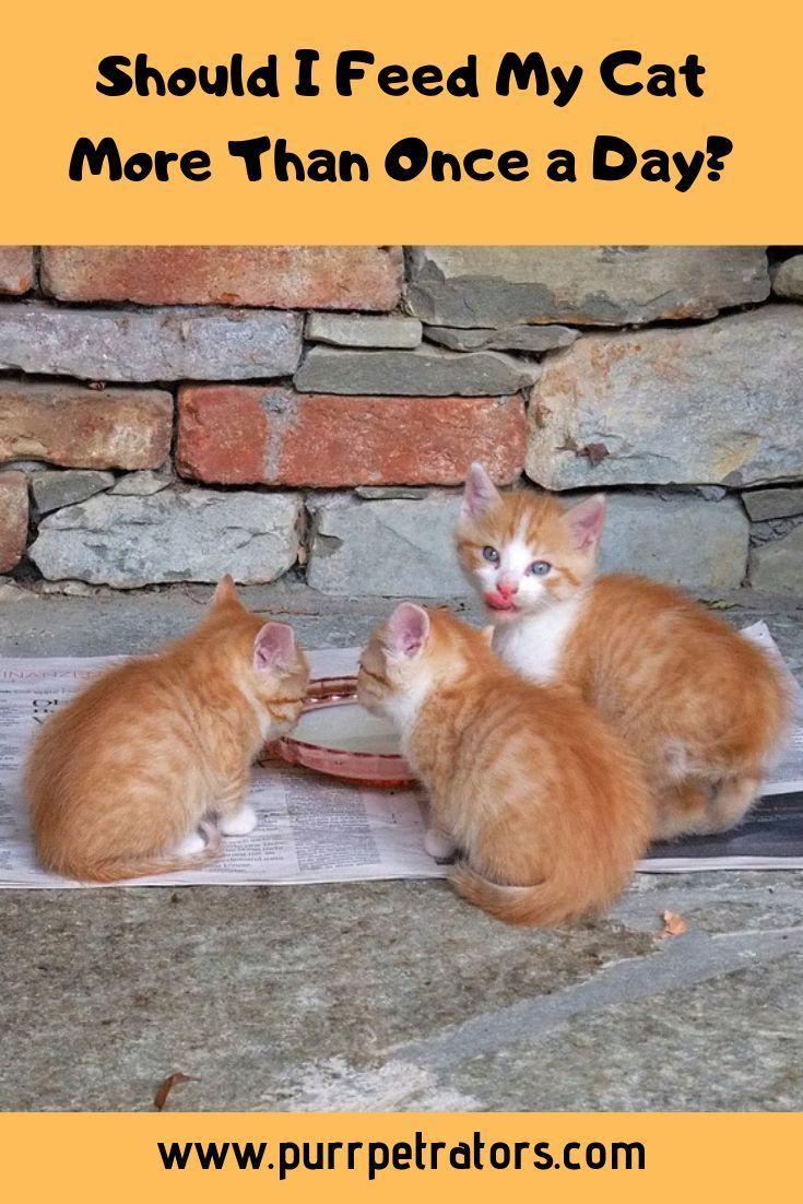 There Are Many Articles Available On Google And Social Media Answering The Question Above Chances Are They All Give Widely Cats Pet Care Cats Cats And Kittens