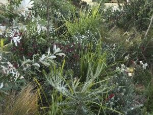 Show gardens at Sydney Garden Show | GardenDrum Jim Fogarty 'The Last to Leave' Gold medal
