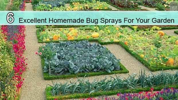 6 Excellent Homemade Bug Sprays For Your Garden - LivingGreenAndFrugally.com