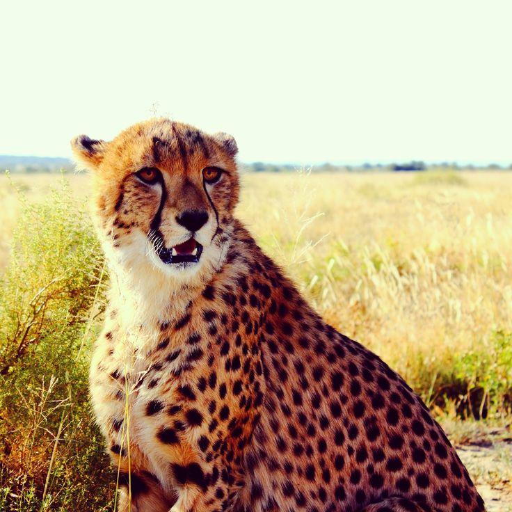 Upplev ett unikt Namibia som volontär på Nankuuse får du närkontakt med djur som lejon, leoparder,babianer och många fler. Ett otroligt äventyr väntar dig.