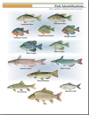 2858 best fish images on pinterest pisces fishing stuff for Types of fish that live in ponds
