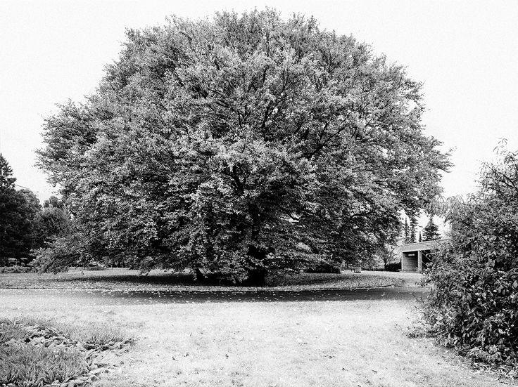Tree by Kristinn Gudlaugsson