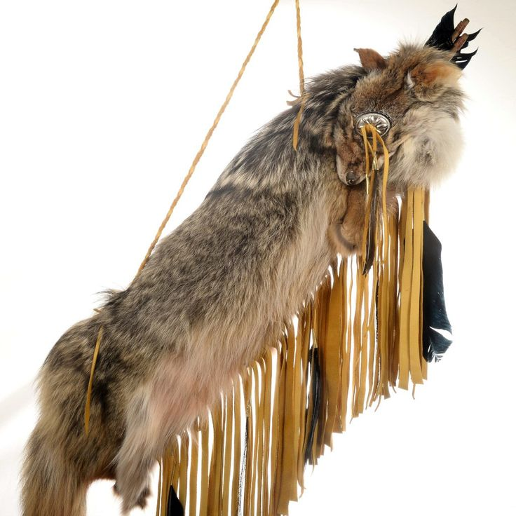 Native American Coyote Quiver With Arrows And Buckskin