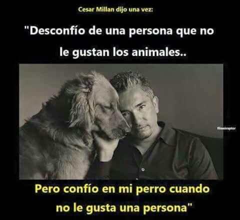 Desconfío de una persona que no le gustan lo a animales... Pero confío en mi perro cuando no le gusta una persona.