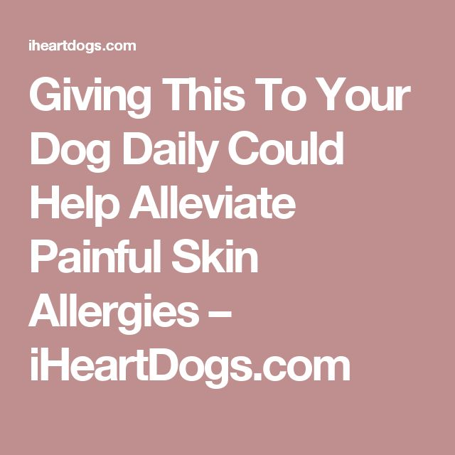 Giving This To Your Dog Daily Could Help Alleviate Painful Skin Allergies – iHeartDogs.com