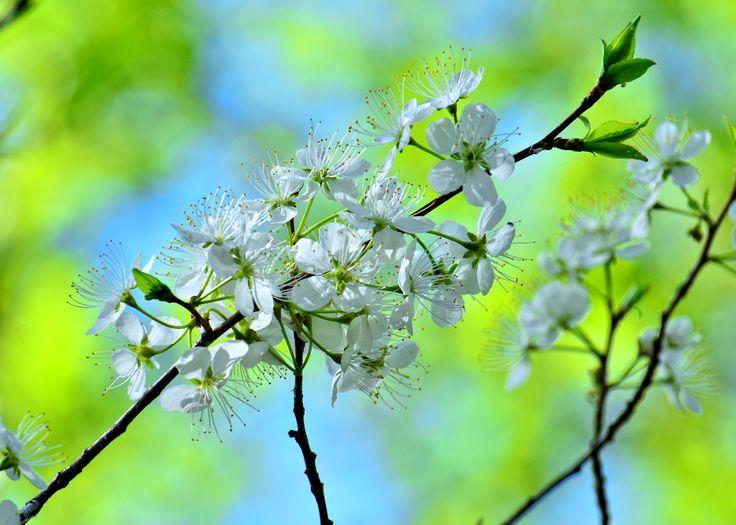 consciousness blossoms