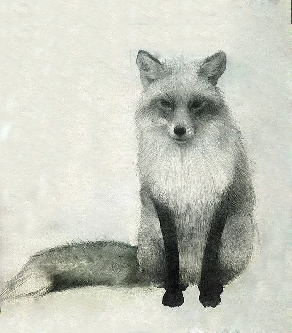 Fox Drawing by annmarshallart on Etsy, $50.00