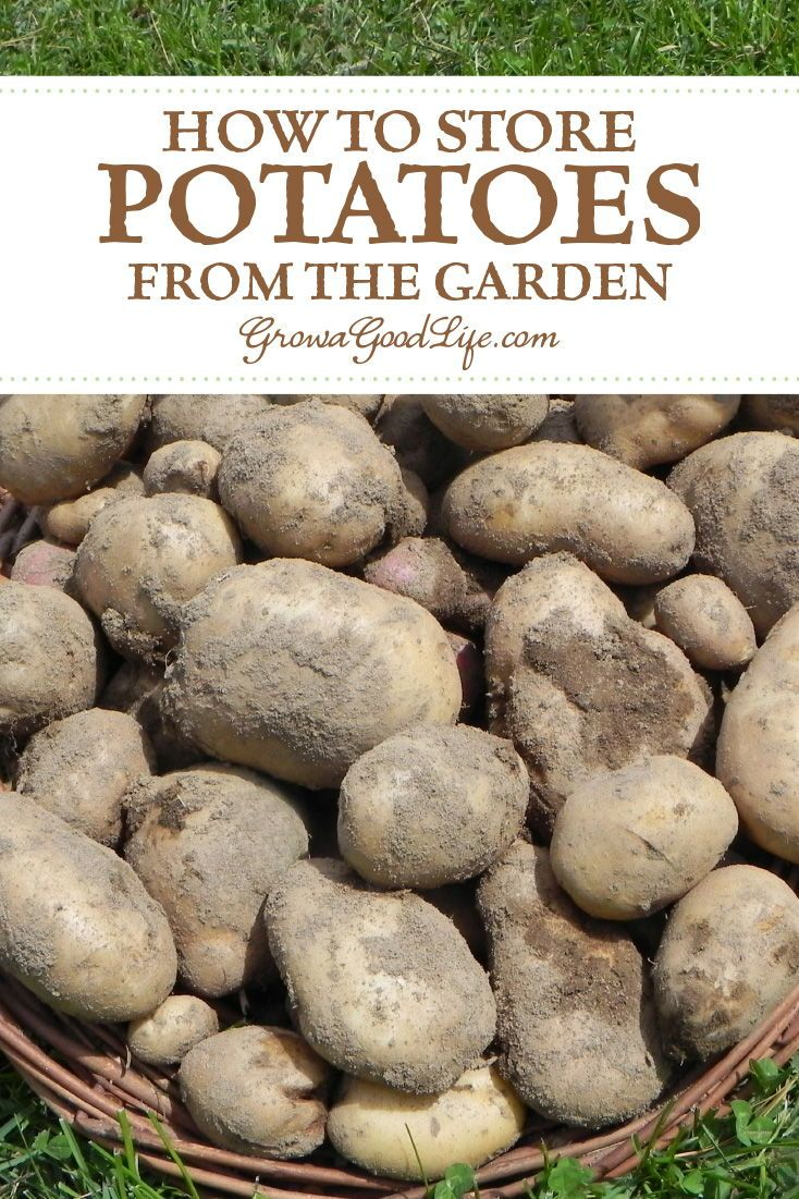 how to store fresh potatoes for winter