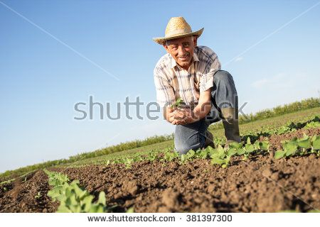 Senior farmer in a field holding crop in nis hands - stock photo