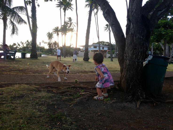 2歳の娘が公園で出会った犬。  犬がくわえていたボールを娘のそばに置くと、 娘は何も言わずにそのボールをポーンと投げ、 またそのボールを拾った犬が娘のそばにボールを置く。  何度かそれを繰り返して遊ぶふたりの姿は、 なんとも言えずにかわいくて、 夕方のひととき、ちょっと楽しい気分になりました。   明日もまたいい一日でありますように♫  Sweet dreams!   ::MamaA::