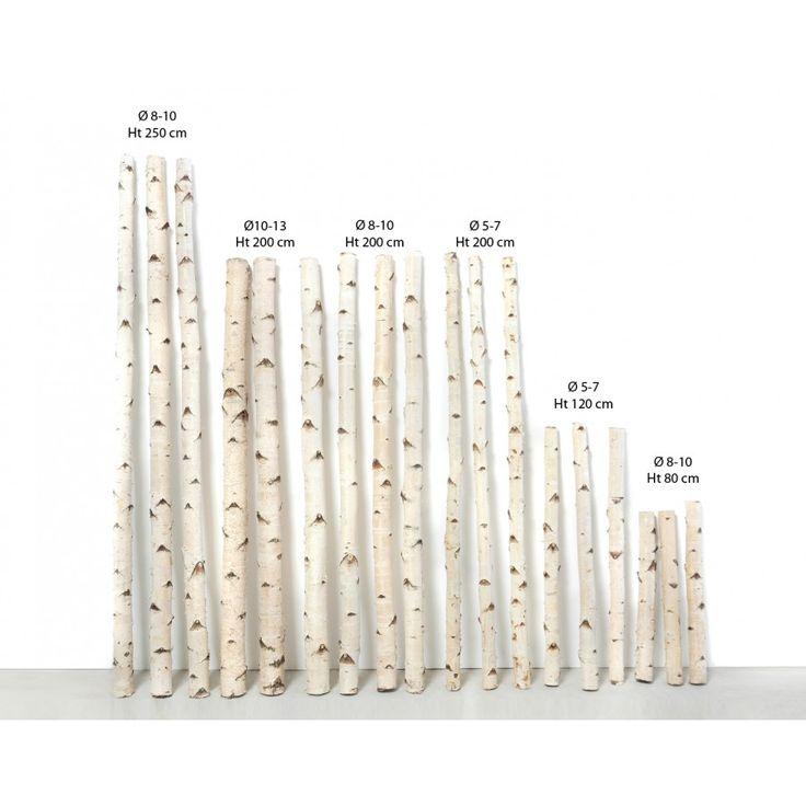 Tronc de Bouleau Lg 250 cm x Ø 8-10 cm - Famille