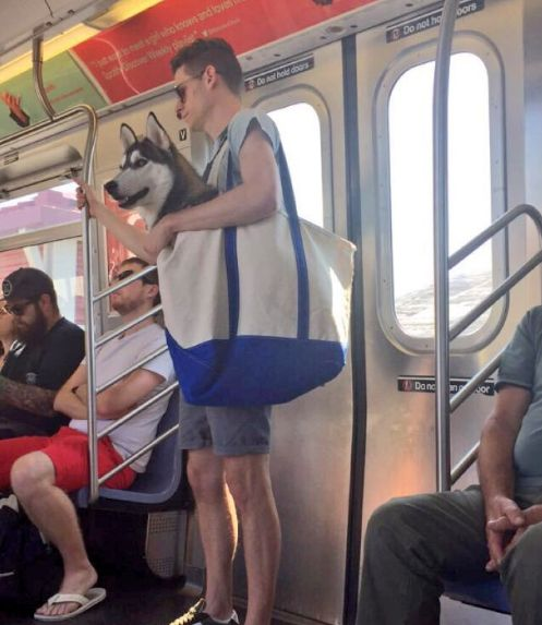All dogs must fit in a bag to ride NYC subway.