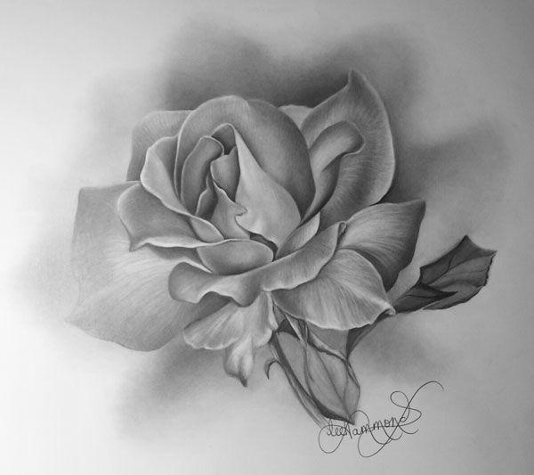 3d pencil drawings of roses