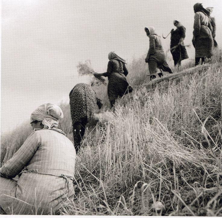 Elli (Greek: Έλλη Σουγιουλτζόγλου-Σεραϊδάρη) b.1899 - d.1998 (better known as Nelly's) was a Greek female photographer: ΚΕΝΤΡΙΚΗ  ΚΡΗΤΗ  -  1939