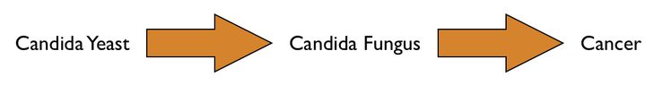 The Candida and Cancer Link