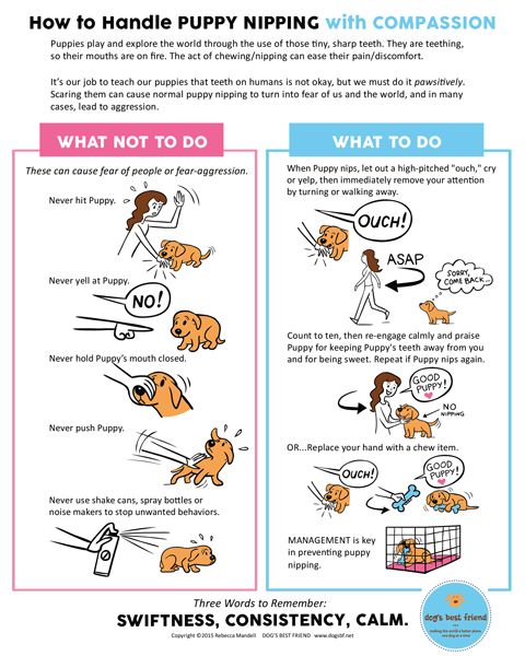 how to handle puppy nipping with compassion (free download) | dog's best friend