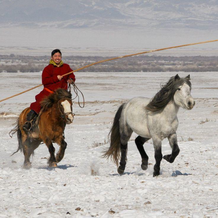 6bf9753e2ea47827f3e2a6499602f85e--mongol