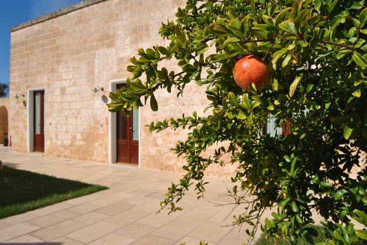 Pomegranate Tree #pomegranate #countryresort #country #masseria