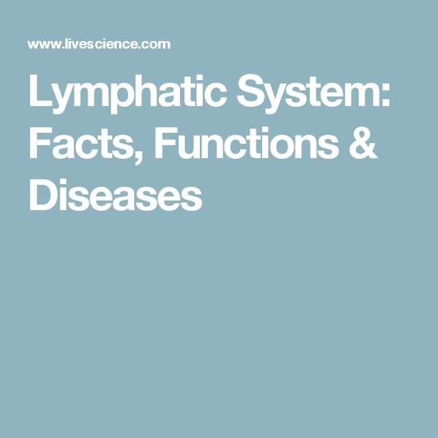 Lymphatic System: Facts, Functions & Diseases