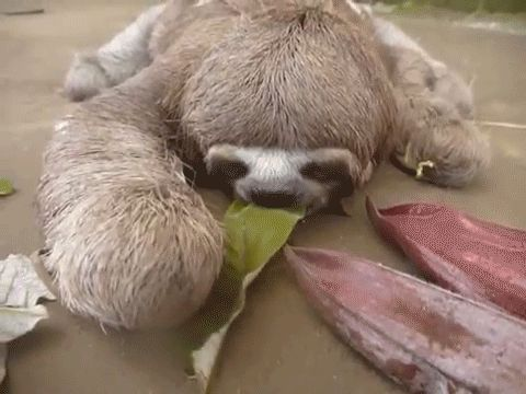 Whenever you're eating salad | 15 Sloth GIFs That Explain Your Entire Existence