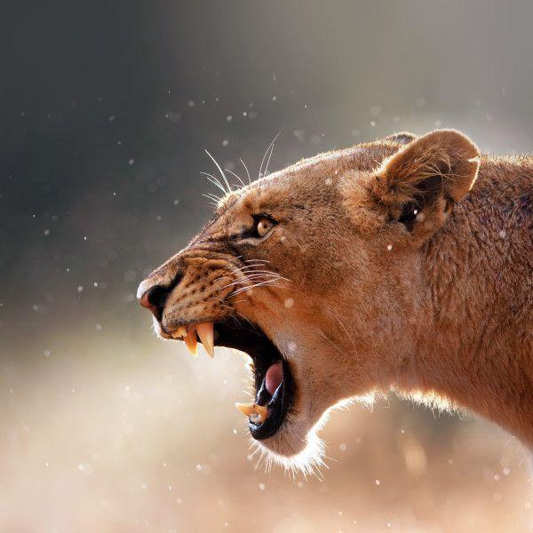 Une femme est un animal sauvage dont le but de l homme est de l'apprivoiser #woman