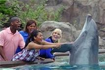 Seaworld San Diego Dolphin Encounter