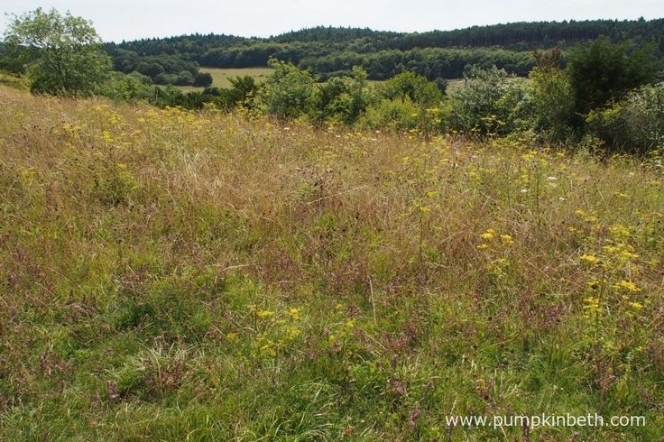 Pewley Down Nature Reserve in Guildford is a super place for an easy, level walk.