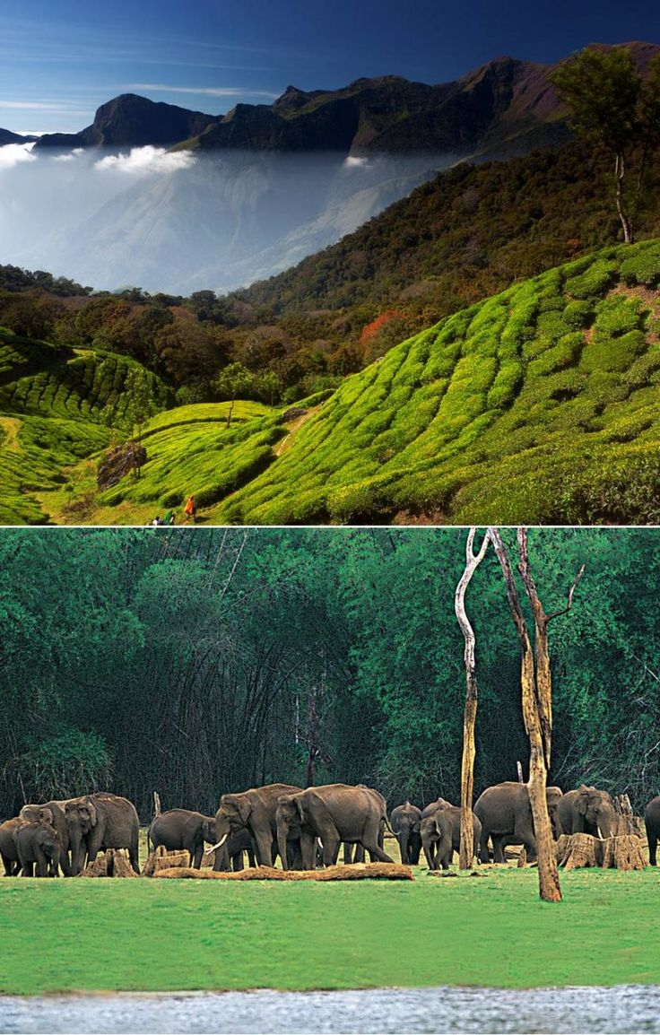 Kerala Tour 4n/5d - Tours From Delhi - Custom made Private Guided Tours in India - http://toursfromdelhi.com/kerala-tour-package-4n5d-cochin-munnar-thekkady-alleppey/
