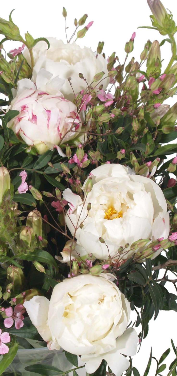 Pioenen om te zoenen! Chique witte bloemen laten bezorgen? Bestel dan dit boeket met witte pioenrozen!
