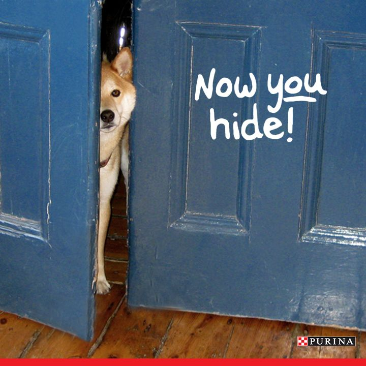 Rainy days are a great time to play dog games inside! Read about one of our favorite dog games, hide and seek!