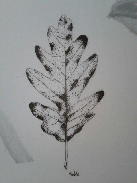 Hoja de roble - tinta sobre acetato - curso dibujo botanico de Marta Chirino - made by pececito arcoiris