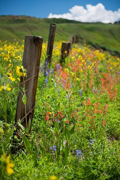 Country fence and wild flowers...i couldn't help stealing this one from cacia's board. So pretty!