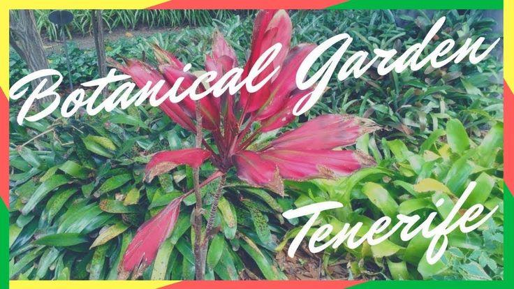 BOTANICAL GARDEN (JARDIN BOTANICO), TENERIFE 2017, SPAIN  #spain#tenerife#botanicalgarden