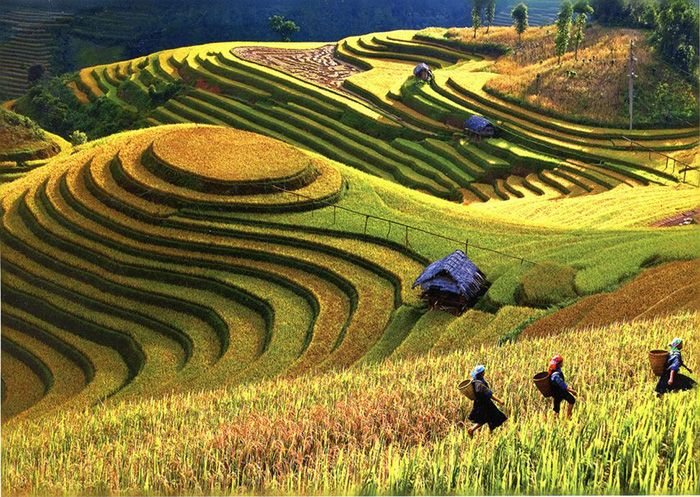 terraced farming