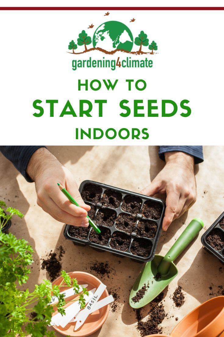 10 Tips For Starting Vegetable Seeds Indoors In 2020 Starting