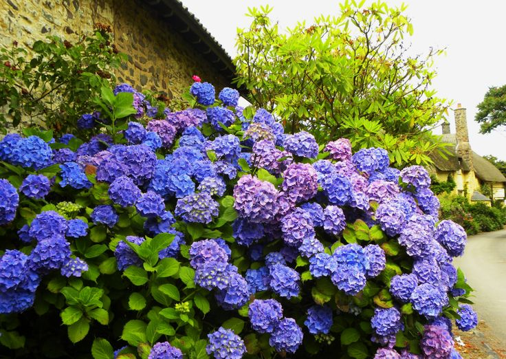 English Garden Beautiful Gardens Pinterest