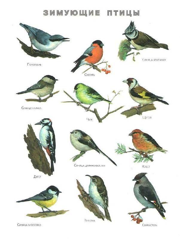 птицы россии книги - Поиск в Google