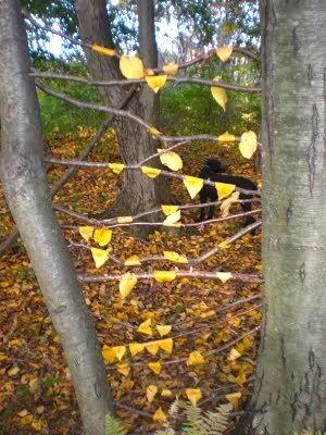 This site us full if ideas for kids all ages, this is called Outdoor Art Installations...