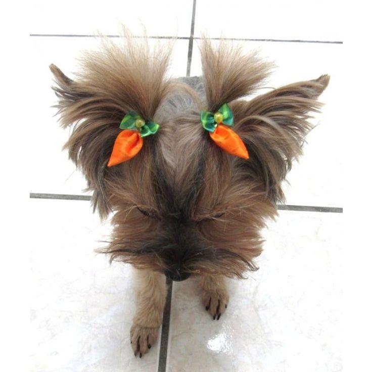 Linda Chuca Cenoura em cetim para inovar com penteados diferentes na pascoa em seu Banho e Tosa.  Ideal para enfeitar o topete de cães de porte pequeno à médio.  Faça a diferença e deixe os clientes de seu Pet Shop encantados com nossos acessórios.