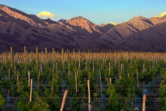 GROW A ROW | Private Vineyard Estates at the Vines of Mendoza, in Western Argentina's Uco Valley