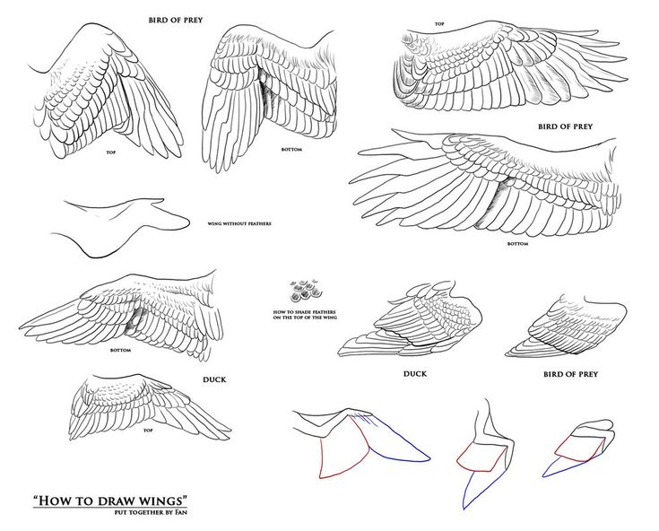 How to draw wings - resources by Fan-the-little-demon on deviantART