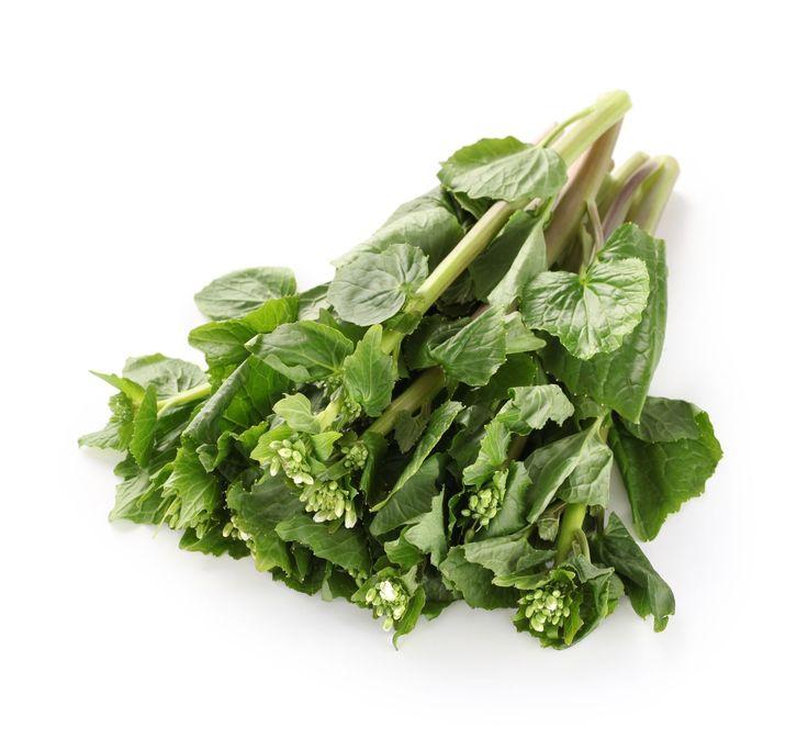 Les 91 meilleures images du tableau tips tricks for for Plante wasabi