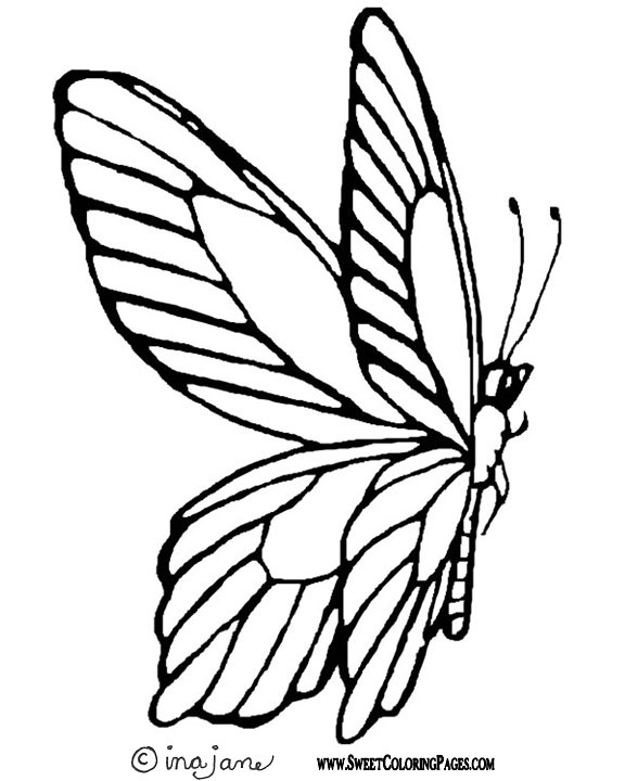 Line Drawing Of Butterfly : Best line drawings butterflies insects images on