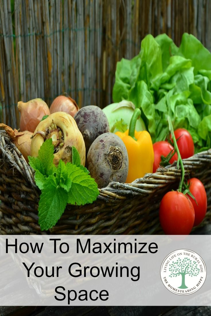 No space for a garden?  You can still grow lots of food with these 8 tips to maximize your growing space! The HomesteadingHIppy