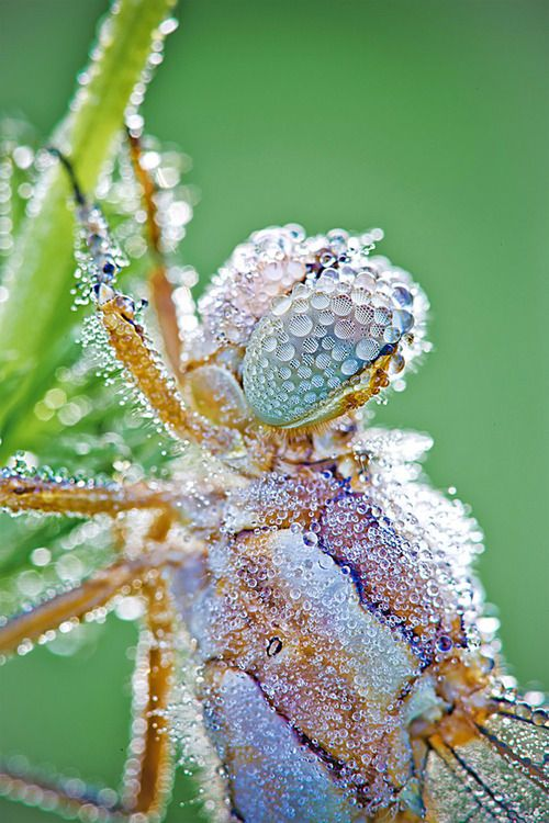 dew covered insect