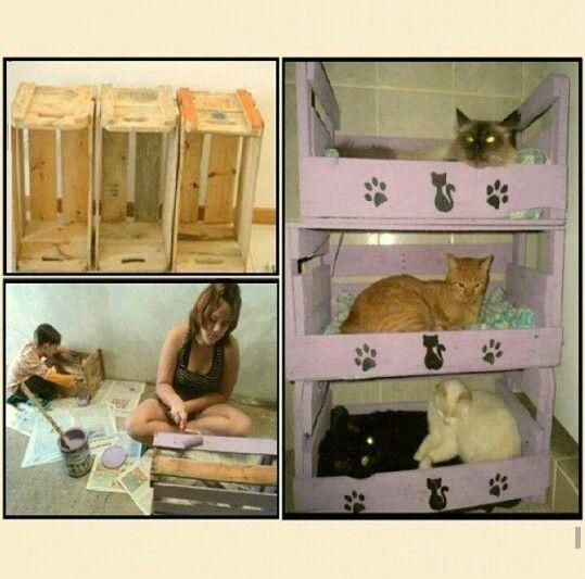 Cat house (kedi evi)