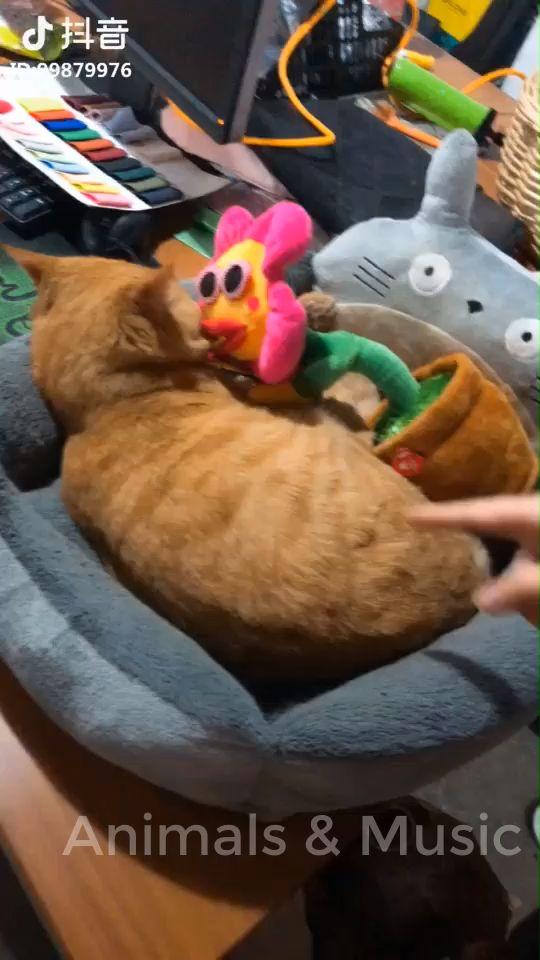 Lustige und süße Katzen