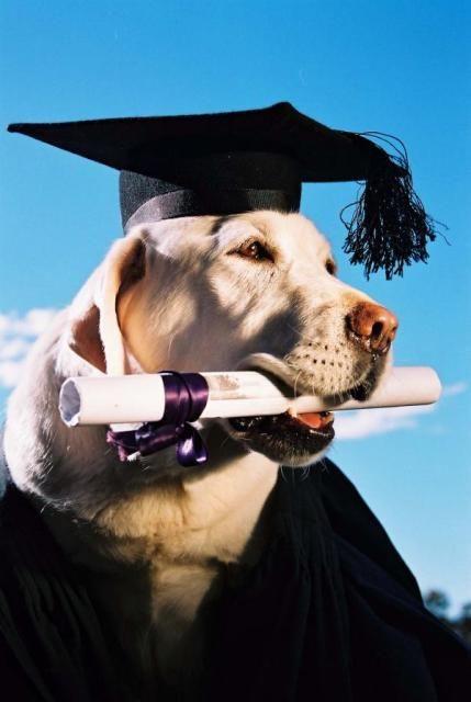 Köpek Eğitmeni