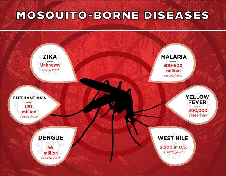 Types Of #Mosquito Borne #Diseases #AnophelesMosquito #AedesMosquito…